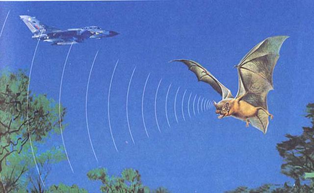 動物能聽到超聲波或次聲波嗎?是如何聽到聲音的?
